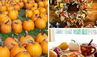 Fall Bucket List: Fun Activities to Try This Season