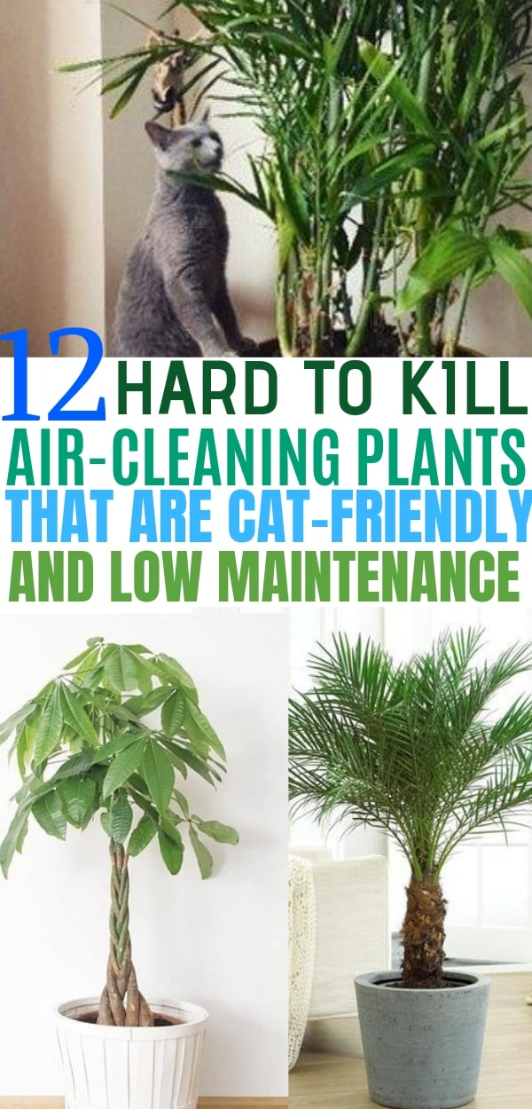 12 Indoor Plants That Clean The Air And Are Safe For Cats Balancing Bucks