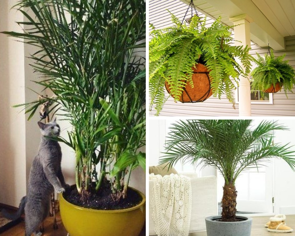 Air cleaning plants that are safe for cats. These cat-friendly plants will purify your air.