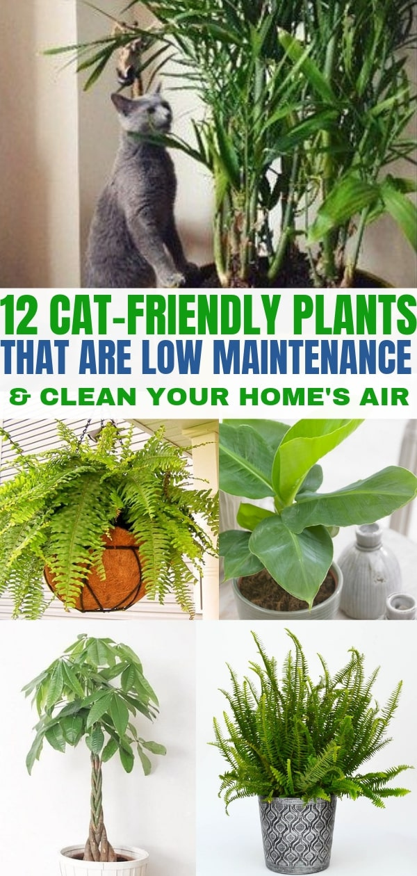 Plants that clean air and are pet friendly. These indoor plants are safe for cats.